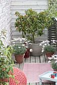 Small balcony with Citrofortunella microcarpa (Calamondine)