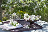 Apple blossoms in bowl as table decoration: Malus