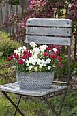 Dianthus caryophyllus 'Grenadin Red' and Viola cornuta 'White'