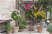 Gravel terrassse with potted plants and herbs in terracotta pots