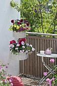 White hanging baskets as etagere, Calibrachoa Superbells