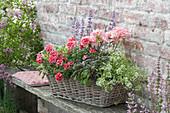 Basket with Pelargonium zonal Summer Idols 'Light Salmon'