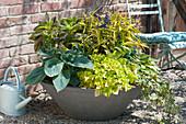 Concrete bowl with leaf decoration plants