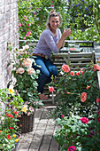Small rose balcony with sitting area, Rose, diascia