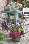 Calibrachoa Unique 'Pink', 'Lavender', Hula 'Appleblossom'