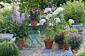 Delphinium 'Magic Fountains lilac pink' White Bee '(Larkspur)