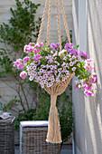 Hanging macrame basket with sisal and calibrachoa hula 'appleblossom'