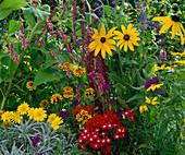 Polygonum orientale, Amaranthus tricolor