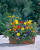 Petunia, Rudbeckia, Calendula