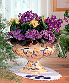 Bowl of Saintpaulia (African Violet)