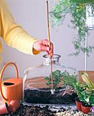 Plant bottle garden
