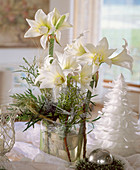 Floral arrangement of Amaryllis 'Jewell' and various branches