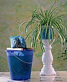 Biological pest control, plant
