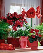 Red arrangement