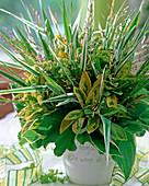 Salvia, (sage), Alchemilla mollis (lady's mantle)
