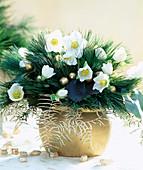 Strauß mit Helleborus niger / Christrose, Pinus / Kiefernzweig