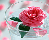 Rose blossom in the glass of water