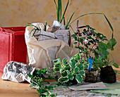 Herbal shipment Engler