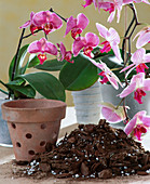 Orchid soil, pot with holes