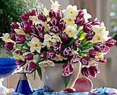 Tulipa 'Arabia Mystery'