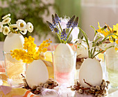 Duck eggs as vases. Bellis (daisies), Muscari