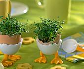 Kressesamen in einer Eierschale als Tischdeko (3 Steps)