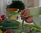 Binding tulip bouquet, removing lower leaves