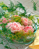 Paeonia officinalis (peony) and dill