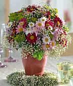 Argyranthemum frutescens 'Bright Carmine', 'Summit pink'