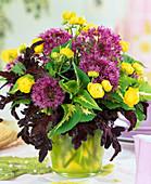 Allium (Ornamental), Trollius europaeus (Trollflower), Coleus
