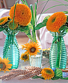 Helianthus annuus 'Santa Fe' (blooming sunflower)