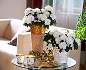 White Christmas, Azalea hybrid, white azaleas