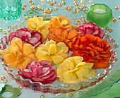 Begonia flowers in glass bowl