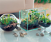 Glass jars with carnivorous plants