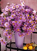 Aster hybrid, autumnal branches