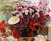 Wire basket with Calluna vulgaris (broom heather), Dendranthema