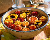 Bowl of flowers, Dendranthema (autumn chrysanthemum)