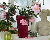 Camellia hybrid 'Donation'