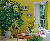 Living room with Sparmannia (Zimmerlinde), Forsythia bouquet,