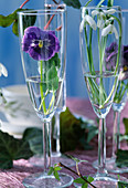 Champagne glasses with Galanthus nivalis (snowdrop, viola)