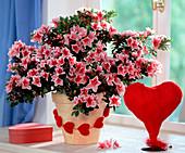 Azalea hybrid, velvet heart necklace, sisal heart vase