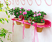 Wall shelf, board with holes as a pot holder, Impatiens