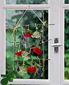 Flowers drying, frame of rose stalks and with flowers