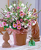 Campanula persicifolia bellflower, Erigeron fine Fleabane