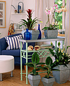 Flower bench as a room divider with phalaenopsis hybrid
