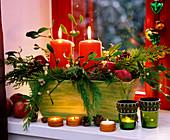 Viscum album Mistletoe, Chamaecyparis cypress, Pinus cones, Malus