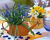 Muscari armeniacum (grape hyacinth), narcissus