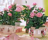 Rose chinese (mini-potted frogs) in rose cups