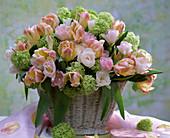 Tulipa (Tulip) Bouquet in pastel colors, Viburnum opulus 'Roseum'