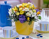 Narcissus 'Bridal Crown' and 'Jetfire' (Daffodil)